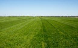 Frodigt grönt gräs med bakgrund för blå himmel Royaltyfria Foton