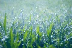 Frodigt grönt gräs med fallande droppar royaltyfria foton