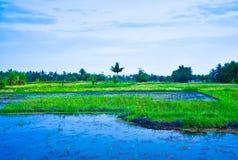 Frodigt grönt risterrassfält med vattenbevattning i sydostlig asiatisk blå solnedgång fotografering för bildbyråer