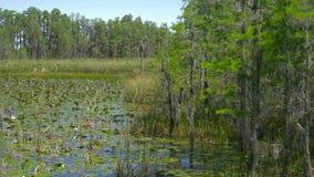 Frodigt grönt träsk i tropisk skogmiljö arkivfilmer