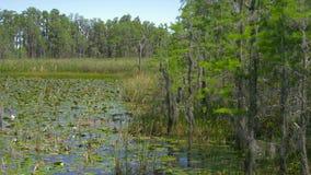 Frodigt grönt träsk i tropisk skogmiljö lager videofilmer