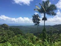 Frodigt grönt tropiskt regn Foresr Arkivbilder