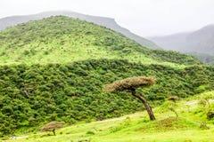 Frodigt gr?nt landskap, tr?d och dimmiga berg i Ayn Khor den turist- semesterorten, Salalah, Oman arkivfoto