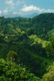frodigt nordligt för colombia back Arkivfoton