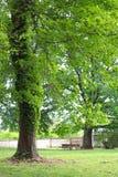 Frodigt picknickområde presenterar stora härliga träd royaltyfria bilder