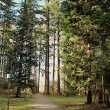 Frodigt skoglandskap Arkivfoton