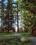 Frodigt skoglandskap Royaltyfri Fotografi