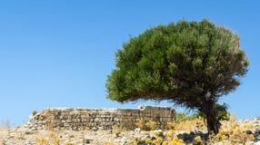 Frodigt träd och gammal stenvägg Arkivfoto