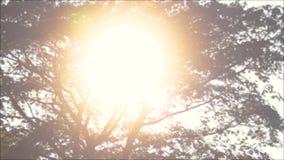 Frodigt träd och ljus sol lager videofilmer