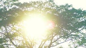 Frodigt träd och sol stock video
