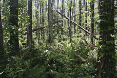 frodigt tropiskt för skog fotografering för bildbyråer