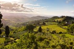 Frodigt Tuscany landskap på vår Arkivbild