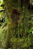 Frodigt växtliv växer på en trädstam i det Monteverde molnet Forest Reserve i Costa Rica arkivfoto