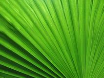 Frodigt vibrerande grönt blad på en trädgård Royaltyfri Foto