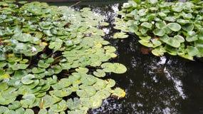 Frog湖 库存照片