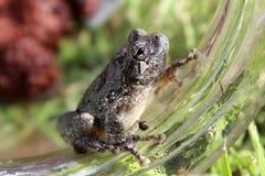 Frog 1 Stock Image