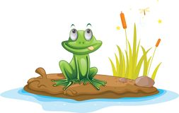 Free Frog Royalty Free Stock Photography - 10520977