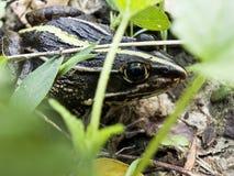 Frog. Art of frog is very absorbing Stock Photo