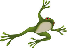 Frog. Amphibian animals aquatic nature Royalty Free Stock Images