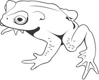 Frog. Smooth high resolution illustration of a frog Royalty Free Stock Image