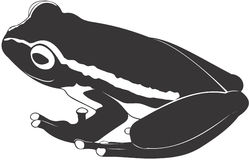 Frog. Smooth high resolution illustration of a frog Royalty Free Stock Photography