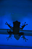 Frog. Fix on the glass wall Stock Photo