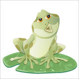 Frog. On a lily leaf, isolated Stock Image
