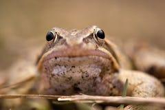 The frog Stock Photos