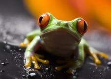 Free Frog Stock Photo - 2103700