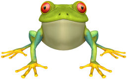 Frog. Green Frog with isolation on a white background Stock Photo