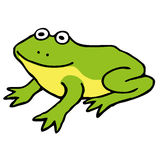 Frog. A slightly more naturalistic frog Stock Images