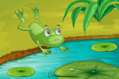 Frog. Leaping into a pond Royalty Free Stock Photography