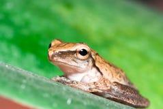 A frog Stock Photos