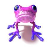 frog Fotografering för Bildbyråer