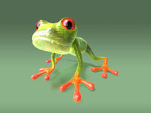 Frog Royalty Free Stock Image