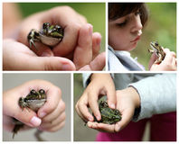 The frog Royalty Free Stock Photo