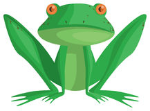 Frog. A cute little frog is watching you Stock Photography