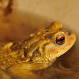 Frog Stock Images