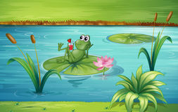A frog. Illustration of a frog in a beautiful nature vector illustration