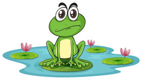 A frog. Ilustration of sad and green frog in water with lotus vector illustration