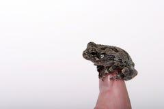 Frog 3 Stock Image