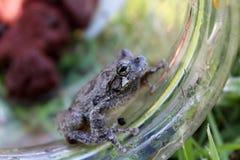 Frog 3 Stock Photo