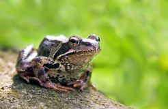 Free Frog Stock Image - 6085701