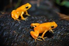 Free Frog Stock Image - 63478111