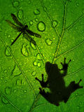 Frog. The frog hunts sitting on a leaf Stock Photography