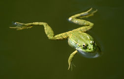 A frog Stock Images