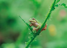 Frog. Nature Details View royalty free stock photos