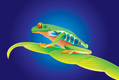 Frog. Vector scene of the frog on turn blue background Royalty Free Stock Image