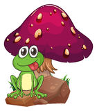 A frog above the rock with a mushroom at the back Stock Photos
