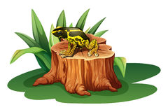A frog above the stump Royalty Free Stock Images